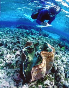 giant_clam_diver