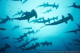 ham sharks underview